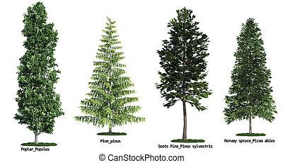 set, van, vier, bomen, vrijstaand, tegen, puur, witte