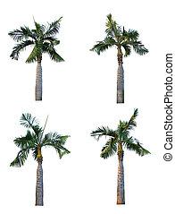 set, van, vier, palmboom, vrijstaand, op wit, achtergrond