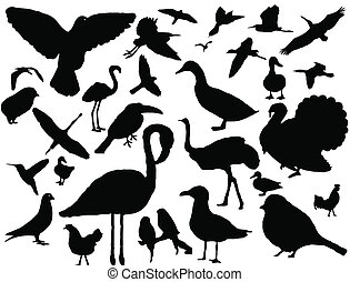 set, van, vogels, silhouette