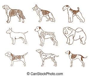 set., vecteur, chiens, illustration.