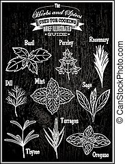set vector images plant herbs for cooking