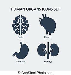 set., vector, organen, menselijk, iconen