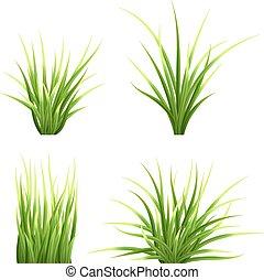 set vector realictic grass