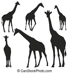 Set vector silhouettes of giraffes