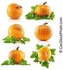 set vegetable pumpkins with green leaves