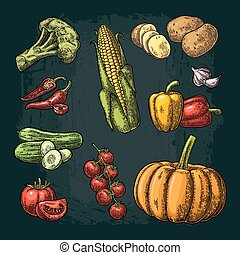 Set vegetables. Cucumbers, Garlic, Corn, Pepper, Broccoli, Potato and Tomato.