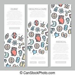 set, verticaal, pattern., drie, illustratie, anatomie, vector, banieren, organen, pictogram