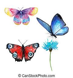 set, vlinder, -, veelkleurig, watercolor, knippen, werkjes, achtergrond