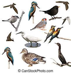 set, vogels, vrijstaand, op wit