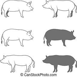 set, vrijstaand, illustratie, varken, vector, achtergrond, witte