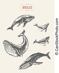 Set whales drawn vector illustration sketch