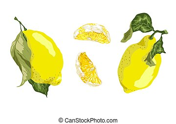 Set with 2 lemon fruits and 2 slices of a lemon