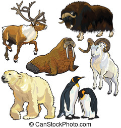 set with animals of arctic, pictures isolated on white ...