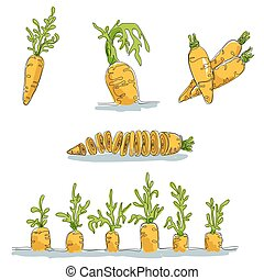 Set with colored images of carrot made in minimalism style