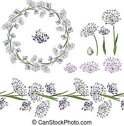 Set with different allium on white.