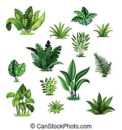 Set with different tropical plants