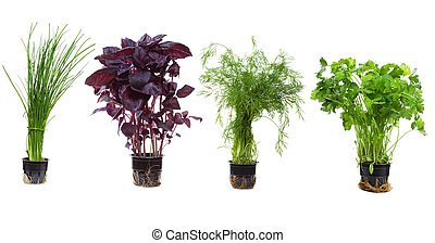 set with herbs