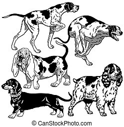 set with hunting dogs, difference breeds, black and white images