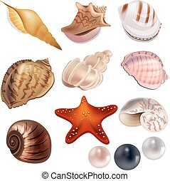 Set with realistic shells and pearls