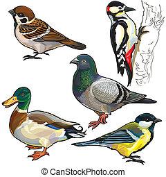 set with wild birds of Europe