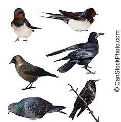 set, witte , vrijstaand, vogels