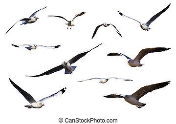 set, zee, vrijstaand, gulls, white.