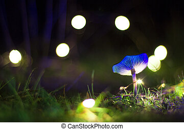 Blue magic mushroom with lights background in a night