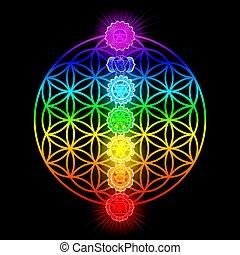 sette, fiore, vita, chakras