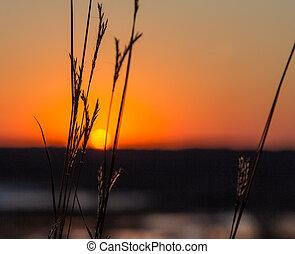 Setting Sun Through the Prairie Grass in Late Autumn in...