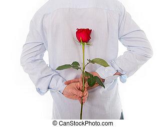 seu, rosa, costas, atrás de, vermelho, segurando, único, homem