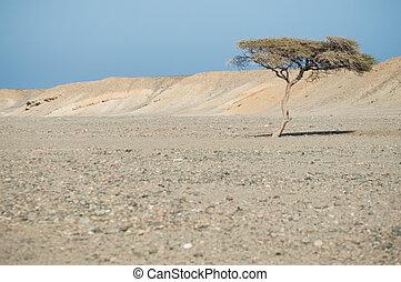 seul arbre, désert