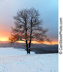 seul, arbre, dans, hiver, levers de soleil, paysage, -,...