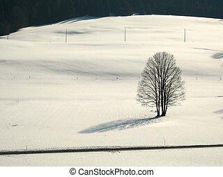 seul arbre, dans, neigeux, champ