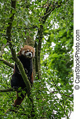 seul, arbre, panda, rouges, séance