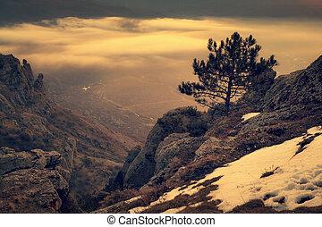 seul, arbre, pin, rochers