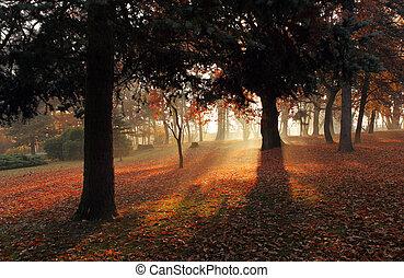 seul, automne, arbre, Parc