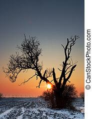 seul, champ, arbre, hiver
