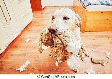 seul, maison, vilain, chien