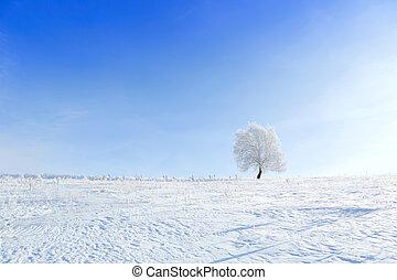 seul, surgelé, arbre, dans, hiver, neigeux, champ