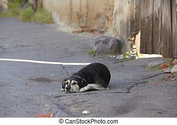 seul, vieux chien