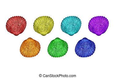 Seven colourful cockleshells (Cerastoderma Edule)