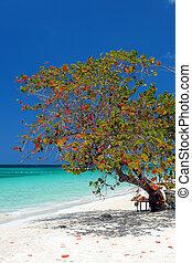 Seven Miles Beach, Negril - The golden sands of Seven Mile ...