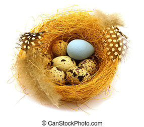 seven quail eggs in a nest