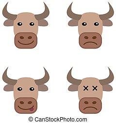 several cow head
