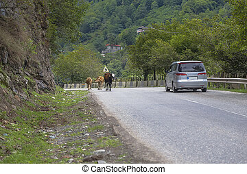 Several cows are on the road