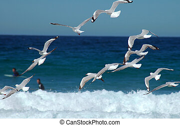 flying seagulls - several flying seagulls, surfers in...
