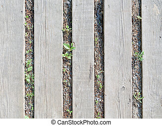 Several gray wooden planks, lying on ground