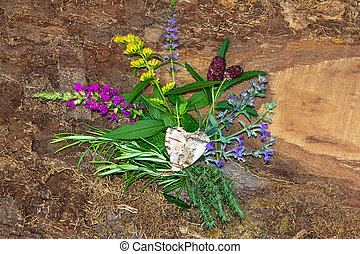 Several healing herbs or kitchen spices. - Several healing...