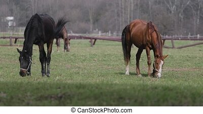 several horses on the lawn in spring.