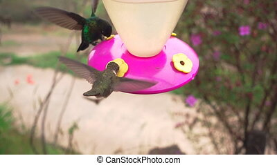Several hummingbirds feeding in feeder - Closeup of several...